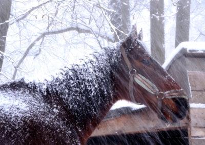 Náš kůň