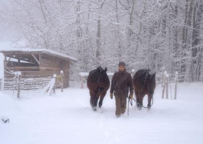 Zdeněk Macháček s koňmi